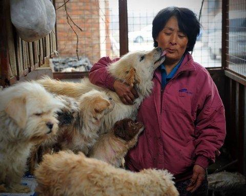 В Китае запретили иметь больше одной собаки