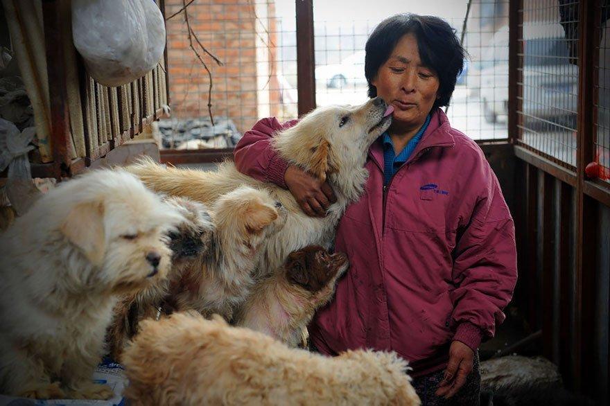 У Китаї заборонили мати більше однієї собаки