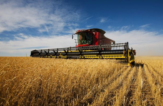 В Минагрополитики похвастались великолепным качеством урожая