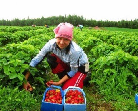 Стало відомо, як безвіз покращив зарплати українців у Польщі
