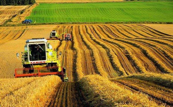 Аграрний бізнес