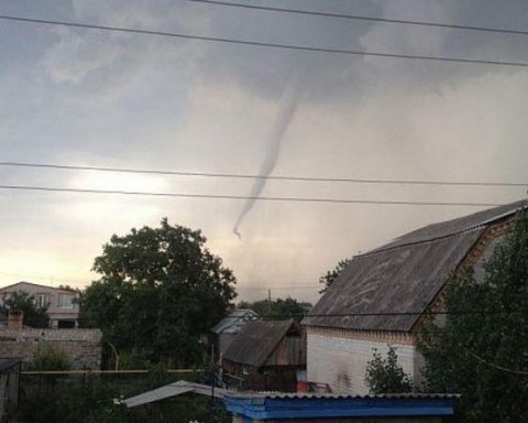 Сильний вітер повалив дерева у Львові
