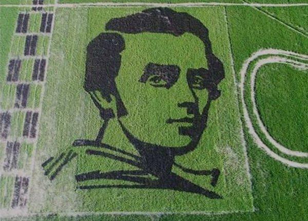 ВХерсонской обл. вырастили огромный  рисовый портрет Шевченко