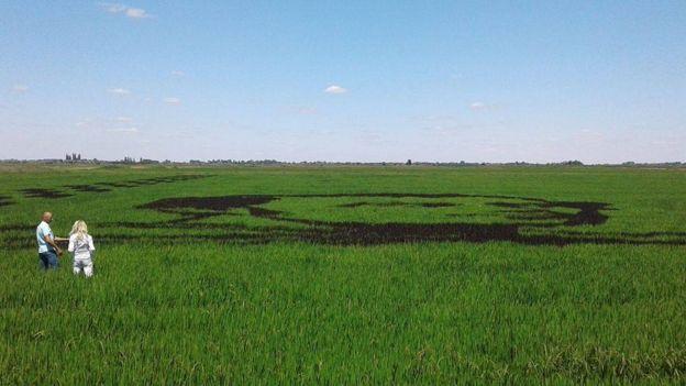 Рекорд в Херсонской области: аграрии засеяли черным рисом портрет Т.Шевченко
