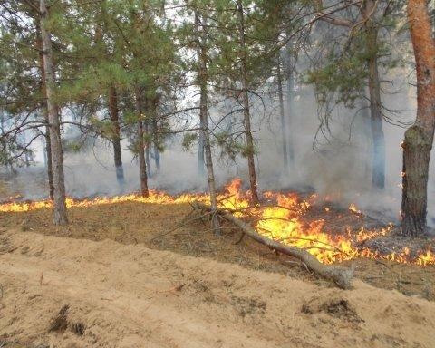 Масштабный пожар на Херсонщине: огнем охвачено 20 га леса