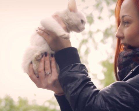 Собачья жизнь: как в Украине обращаются с бездомными животными