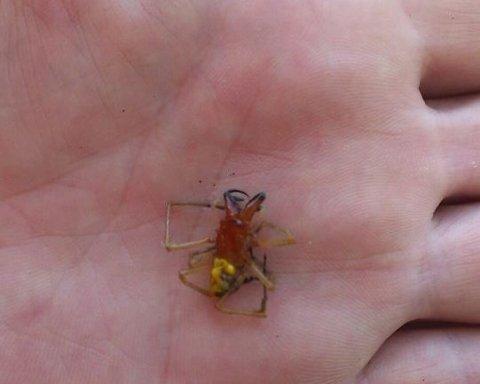 Ученые открыли новых жутких созданий
