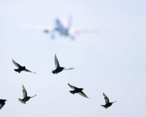 В Киеве заметили уникальную птицу: появились кадры