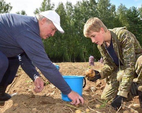 Лукашенко с сыном выкопали 105 тонн картофеля, есть фото
