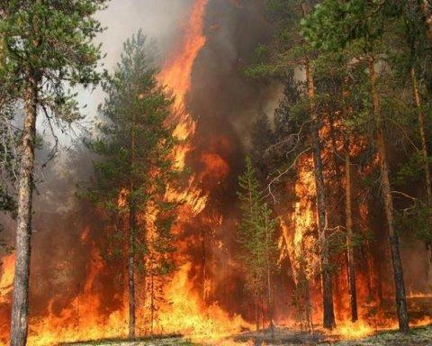 ДСНС сообщила о масштабном лесном пожаре на Житомирщине