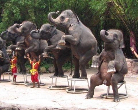 В Китае погибли два человека во время нападения диких слонов