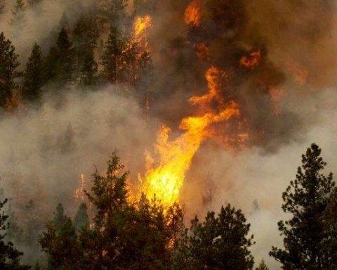 На Дніпропетровщині палає 50 га лісу