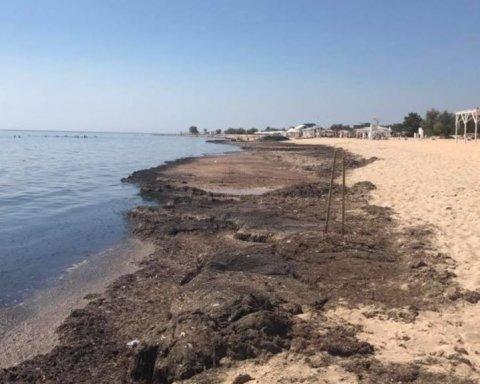 Пляжи аннексированного Крыма постигла очередная беда