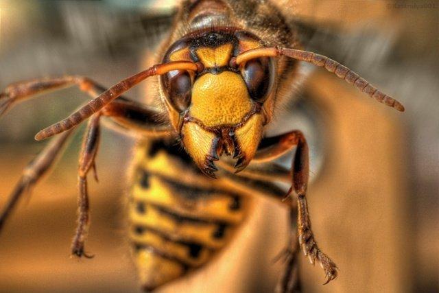 ВХарьковской области мужчина скончался отукуса опасного насекомого