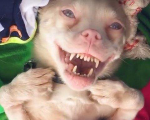 Видеохит: собака, которая смеется как человек
