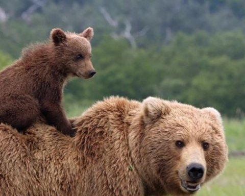 »Дождь» из медведей ошеломил соцсети (видео)