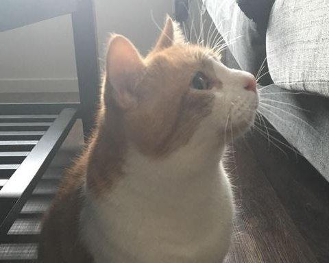 Кот с большими пальцами озадачил пользователей интернета