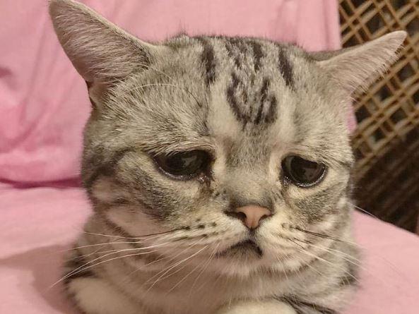 Серце крається: у мережі показали найсумнішого у світі кота (фото)