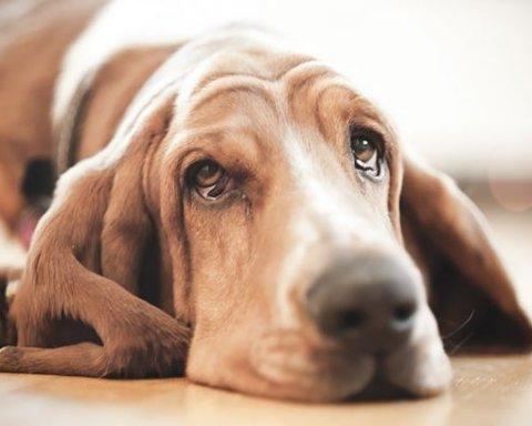 Это фиаско: падение собаки в речку взорвало сеть (видео)