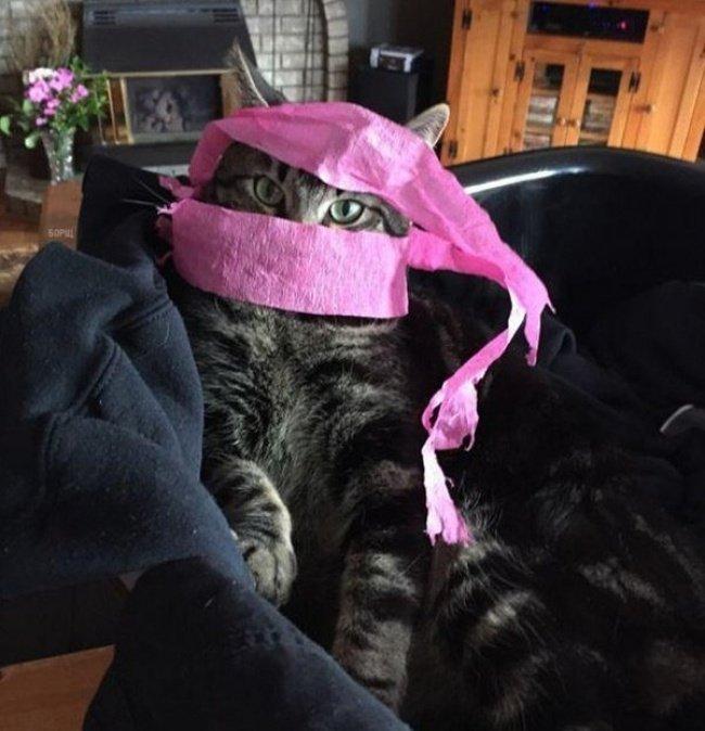 Коты-бунтари, которые взломали систему (фото)