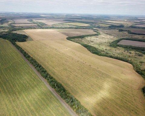 Украинские поля с марихуаной показали с высоты птичьего полета (видео)