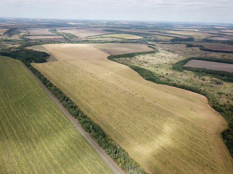 Українські поля з марихуаною показали з висоти пташиного польоту (фото)