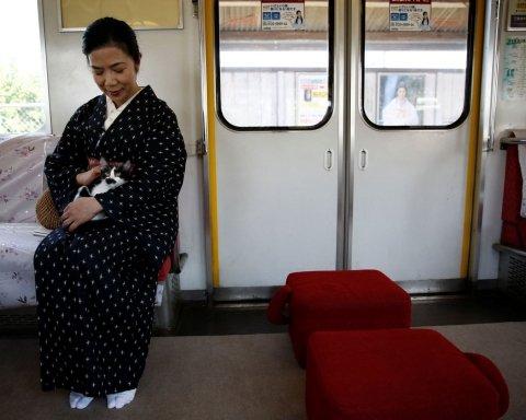 Коты в японском поезде взорвали Сеть (видео)