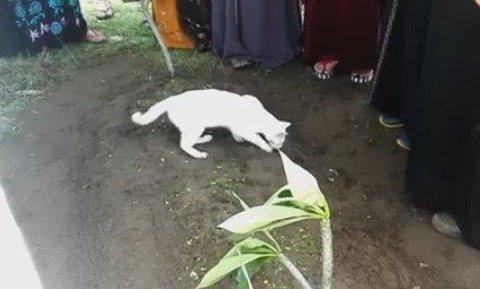Відданість кота приголомшила мережу (відео)