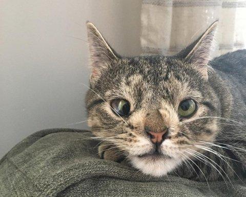 Кіт став зіркою Instsgram через хворобу (фото)