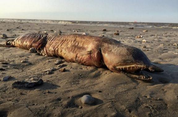 Загадкову істоту викинуло на берег у США після буревію (фото)