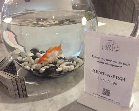 Готель в Бельгії здає відвідувачам на ніч золоту рибку