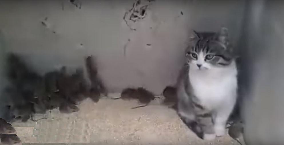 """""""Бракований"""" кіт у коробці з сотнею мишей насмішив мережу (відео)"""