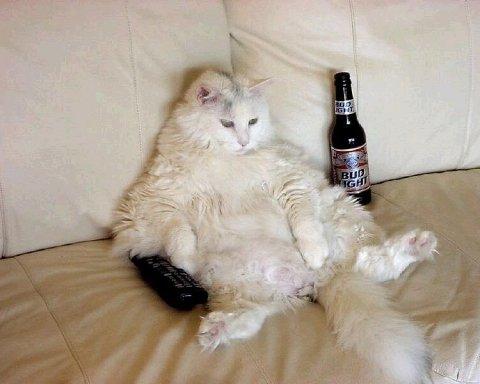 Ленивый кот стал звездой соцсетей (видео)