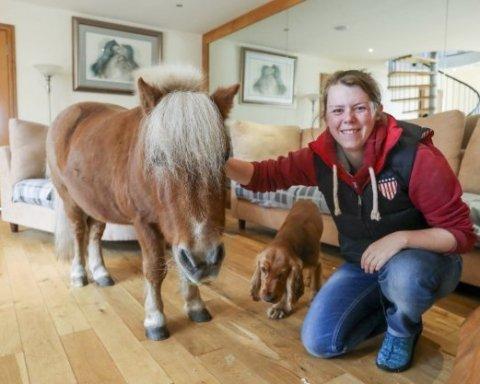 Шотландский пони уверен, что он собака (видео)