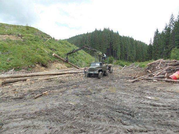 Массовую вырубку леса разоблачили под Киевом (фото)