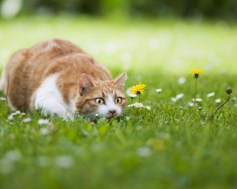 Невдале полювання кота розсмішило мережу (відео)