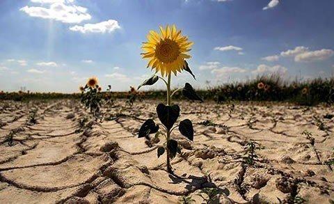 Південь України стане пустелею: вчені приголомшили прогнозом