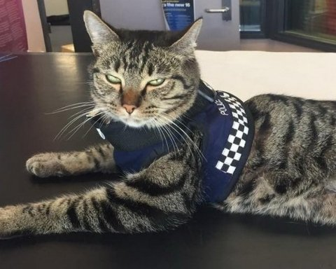 Новозеландская полиция взяла на работу котов