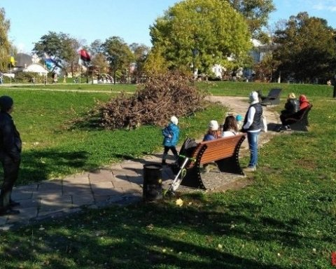 На Пейзажной аллее в Киеве неизвестные спилили более десяти деревьев