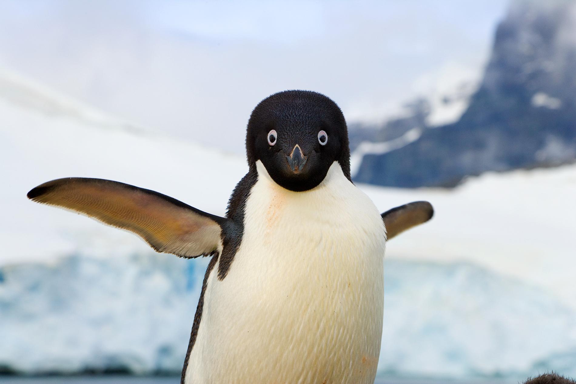Fotos concentracion pinguinos 2012 63