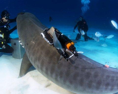Невероятная выдержка: дайвер несколько часов отбивался гарпуном от акулы (фото)