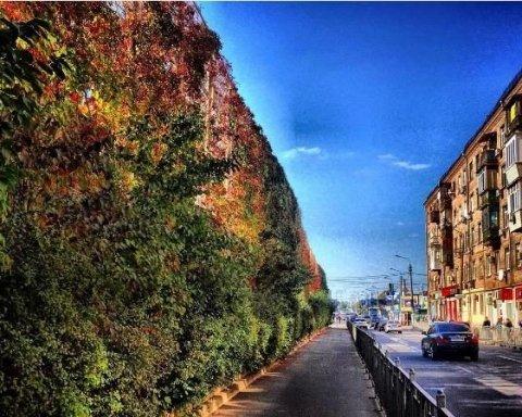 """""""Золота осінь"""" у столиці: найяскравіші фото"""