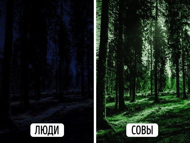 Дивовижна відмінність: як бачать світ люди і тварини (фото)
