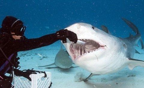 Акула проковтнула GoPro, але та продовжила знімати (відео)