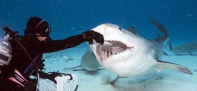 Акула проглотила GoPro, но та продолжила снимать (видео)