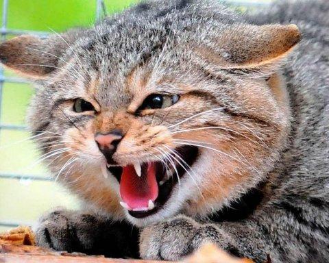 Моторошна смерть: кіт випадково задушив 3-місячне немовля
