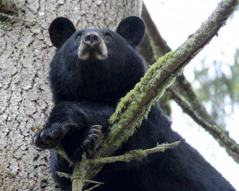 Как медведь на диване перед телевизором отдыхал (фото)
