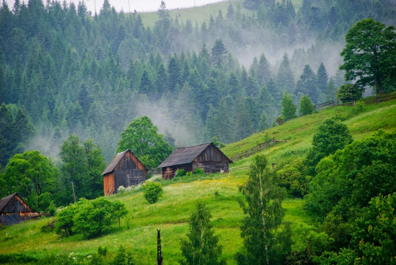 ВИвано-Франковской области в итоге падения дерева пострадал ребенок