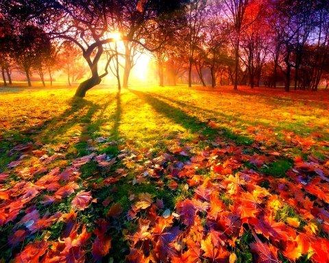 """Осінь зачаровує: в мережі показали фото пейзажів """"до"""" і """"після"""""""