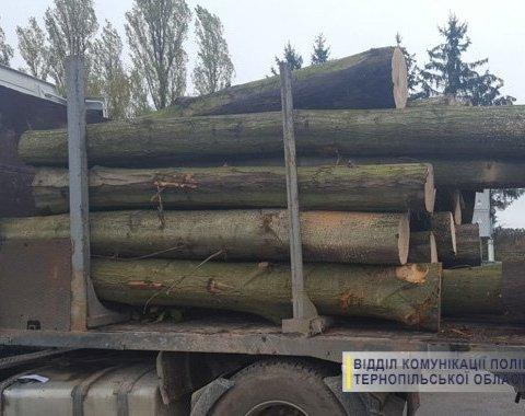 Незаконная вырубка леса на Тернопольщине: люди перекрыли дорогу и не пропускают грузовики